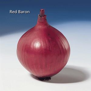groot-115Red-Baron.jpg